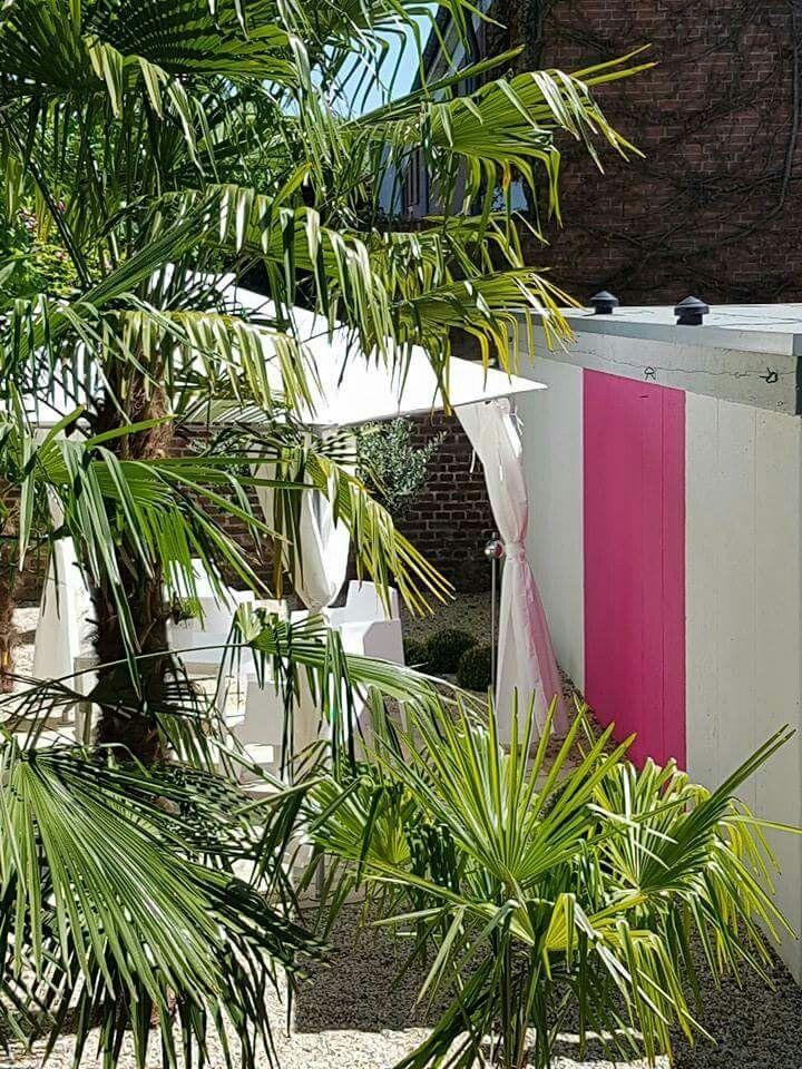 Garten, diesen Sommer mal in pink Palmen