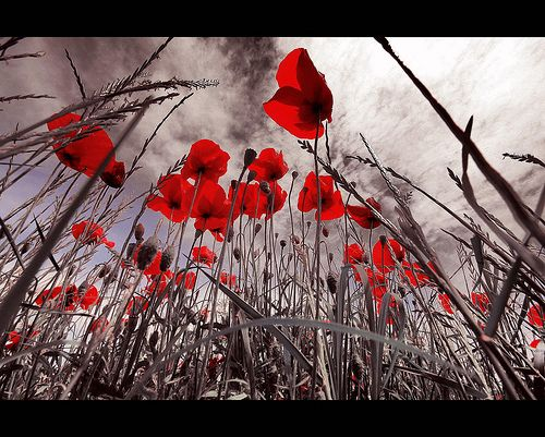 They shall not grow old, as we that are left grow old:  Age shall not weary them, nor the years condemn.  At the going down of the sun and in the morning  We will remember them.