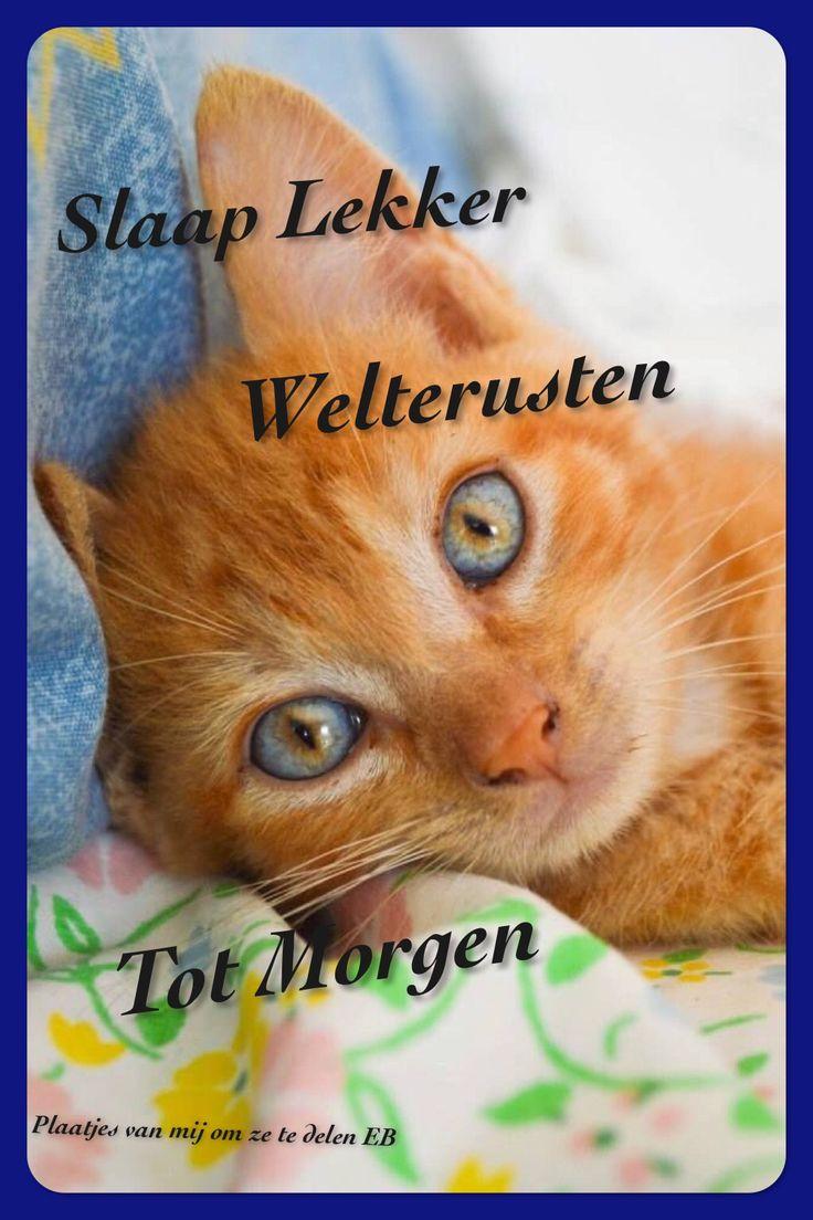 Sleep well; good night; till tomorrow! Schattige kittens