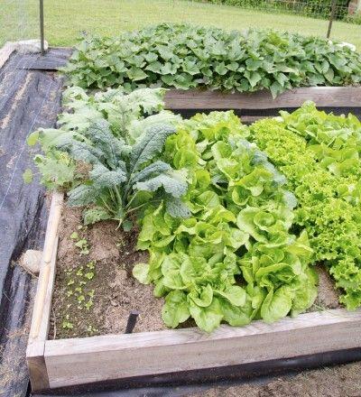 potato salad скачать