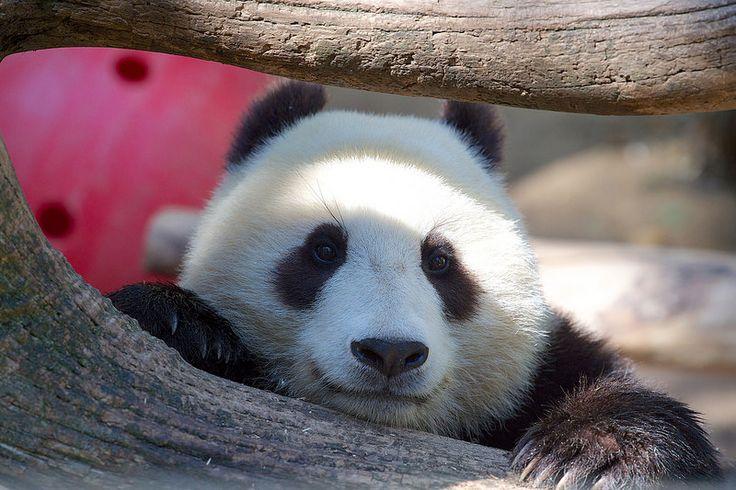 Happy Wu-dnesday! Photo by Mollie Rivera