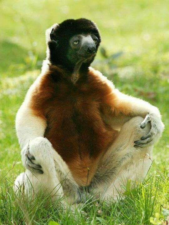 Excepcional As 97 melhores imagens em Animais - Macaco no Pinterest | Macacos  XJ41