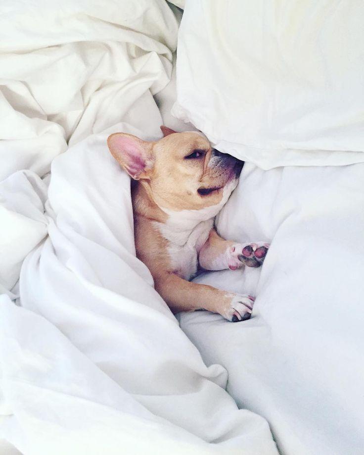 dog イヌ 犬可愛い画像まとめ http://ift.tt/1SpK84l