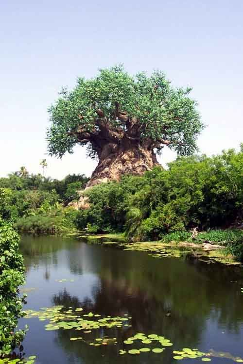 54.Tree in Limpopo (South Africa)