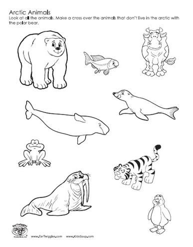 coloring pages of arctic animals - photo#26