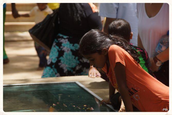 Unterwegs in Sri Lanka. Der Bürgerkrieg ist gottlob überwunden, ein wunderbares Reiseland mit einer erstklassigen Küche und einer jahrtausendealten Kultur wartet auf uns!