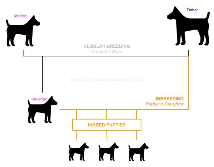 Dog Inbreeding Explained For Everybody Interested Into Dog