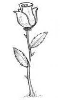 Como desenhar passo a passo uma rosa a lápis ou carvão