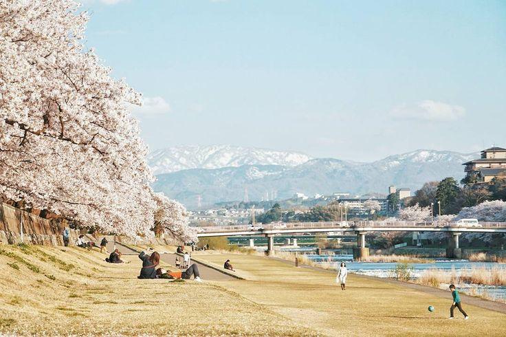 Kemarin saya sempet bilang ingin berkunjung ke Jepang pada musim yang berbeda. Niatnya sih bakalan main ke Jepang lagi pas autumn nanti . Eh ternyata udah ada yang ajakin ke Jepang waktu musim panas. Iyain aja soalnya dua kali main kesana pas musim semi terus . Jadinya ya yang dicari bunga sakura yang mekar seperti ini deh. O iya kalau musim panas gini paling asik ngapain aja sih di Jepang? . Katanya sih bakal panas banget musim panas di Jepang. Tapi yah yang penting cuaca cerah saja…