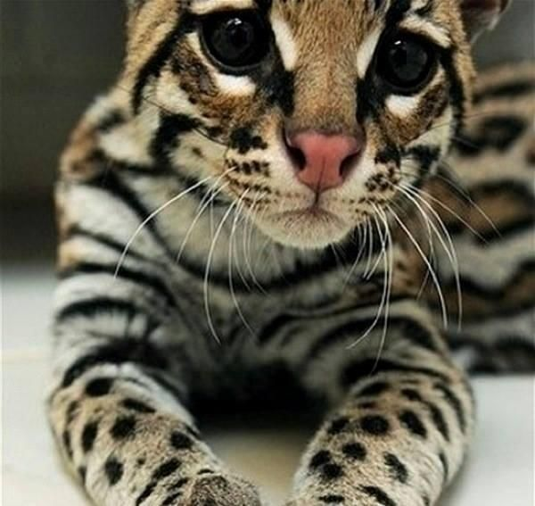 54 Best Kitty Images On Pinterest