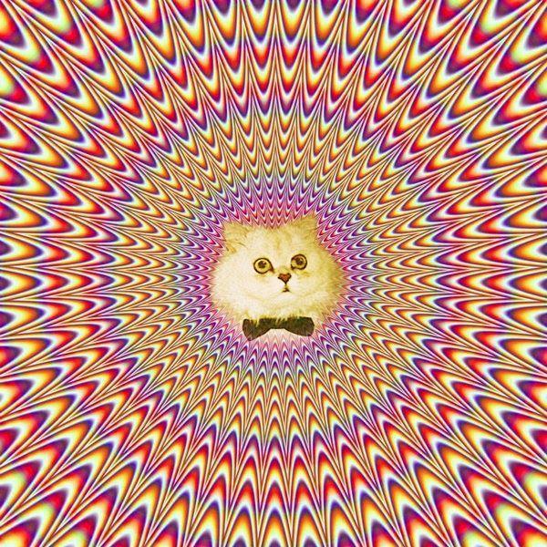 картинки обман зрения с кошками