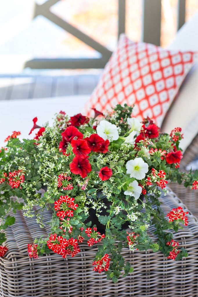 Tips for Perfect Potted Flowers Southern