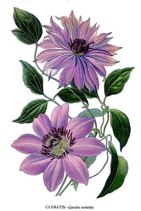 Botanical Print Collection Vintage Garden Flower Note Cards