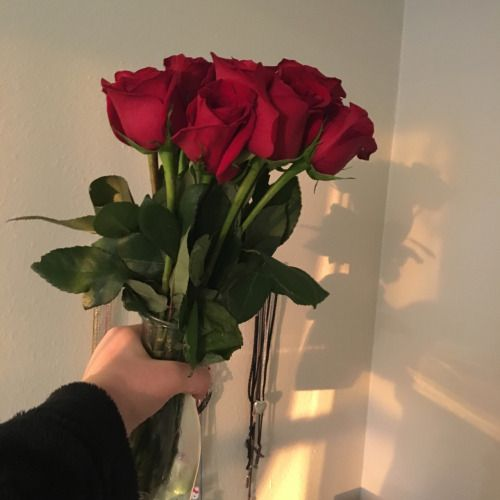 Happy Rose DAy 2017. Rose DAy Quotes, Rose Day messages, Rose Day Image, Rose Day, Beautiful Roses