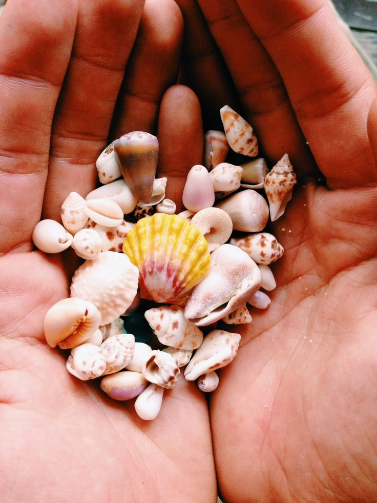 Handful of sunshine in Martinique. You can get these shells everyday at the beach! Martinique has the best beaches in the Caribbean and the best place to find sea shells.