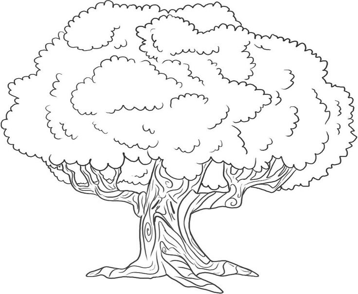 9 besten bäume  trees bilder auf pinterest  bäume