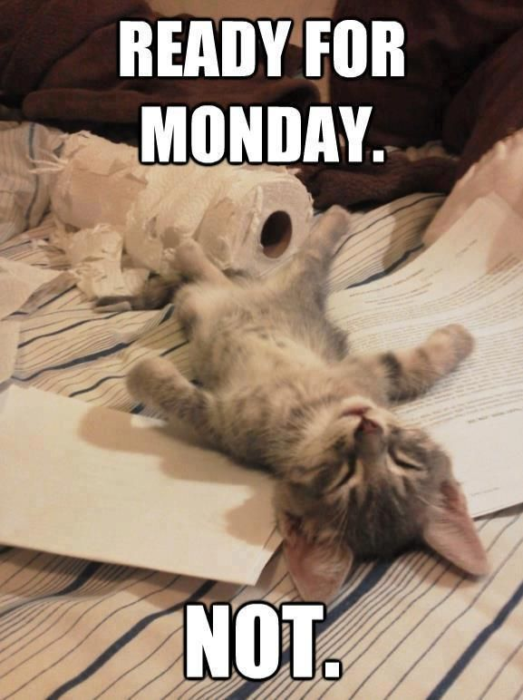 Image result for it's almost monday cat images