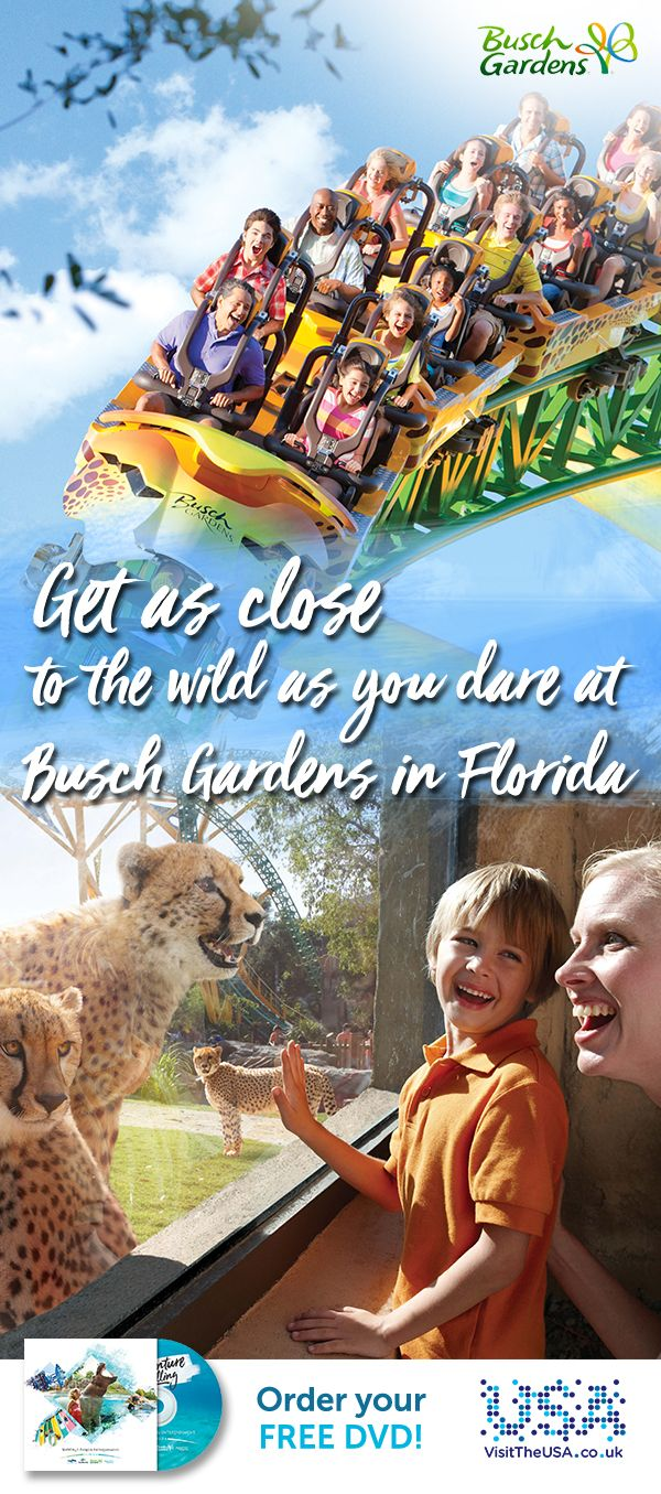 Come within a whisker of some of the world's rarest animals, feel their energy and inhabit their world on Florida's wildest rides at Busch Gardens.