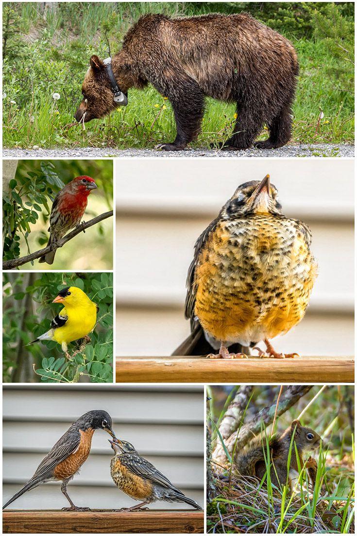 Chasing wildlife in Alberta