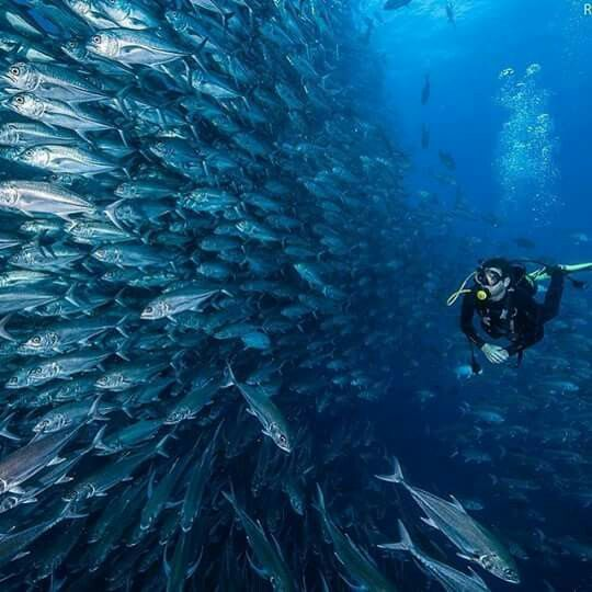 Cocos Island: 60 Best Cocos Island, Costa Rica 2016! Images On Pinterest