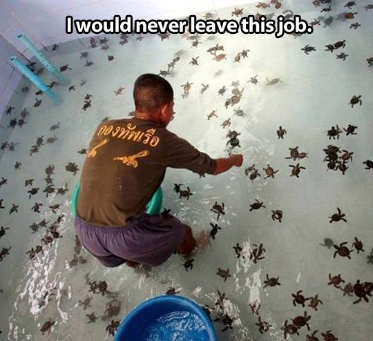 Working with baby turtles… I would be full body in the water trying to float and be their life raft and have my face as close to them  as possible for as long as every breath can last