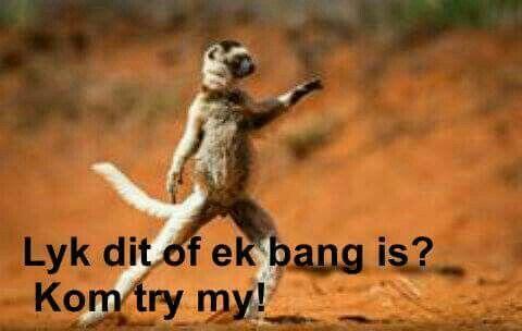 Lyk dit of ek bang is? Kom try my!