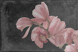Orchid, Fine Art, Photo Art