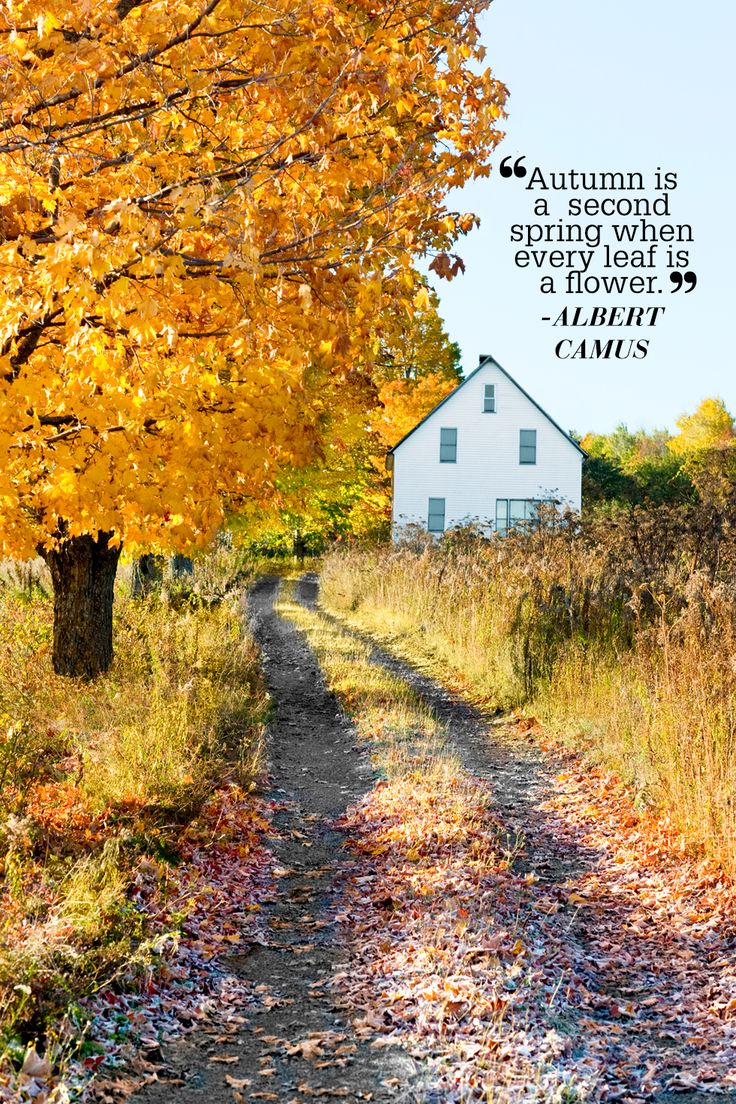 """Looking for an inspirational quote about fall? Look no further! """"Autumn is a second spring when every leaf is a flower."""""""