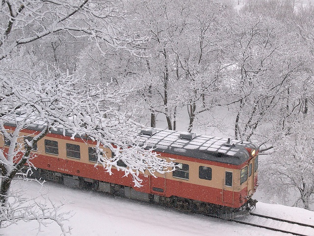 """It goes in the forest of the snow"" -Japan - . by nicenature, via Flickr"