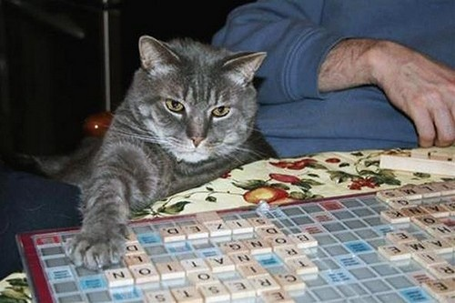 Image result for scrabble cat