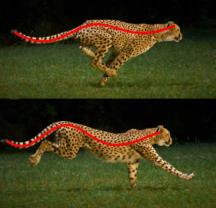 77 best movement images on Pinterest | Animation reference, Animal ...
