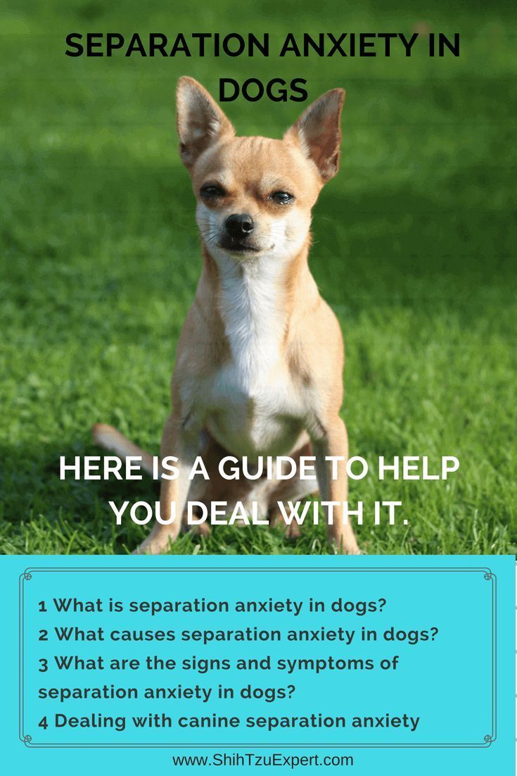 Separation Anxiety In Dogs Here Is A Guide To Help You Deal With