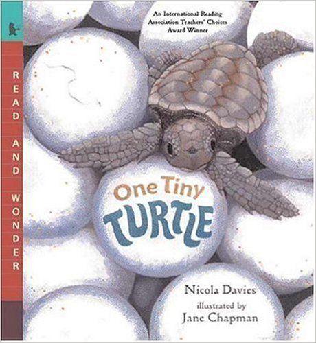 One Tiny Turtle: Read and Wonder: Nicola Davies, Jane Chapman: 9780763623111: Amazon.com: Books