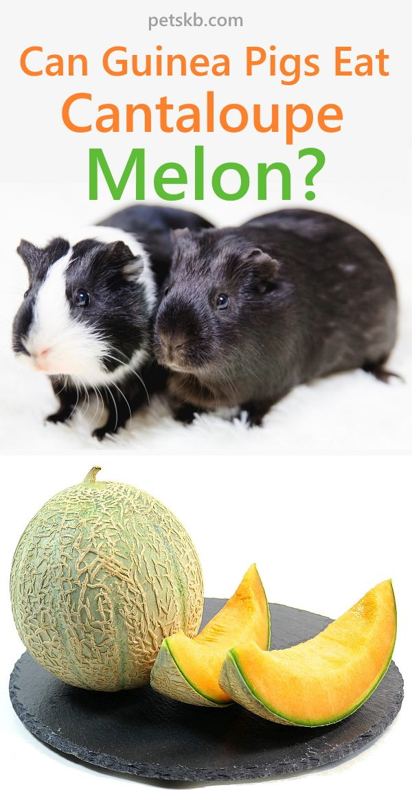 Pin On Family Pets Cantaloupe is great for you! pinterest