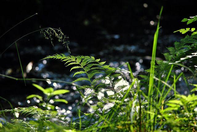 NAŠE LÁSKY: Když usnou lesy hluboké a kolem ticho jest, a nebe...