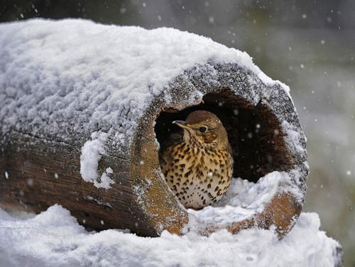 *Shelter in the Snow