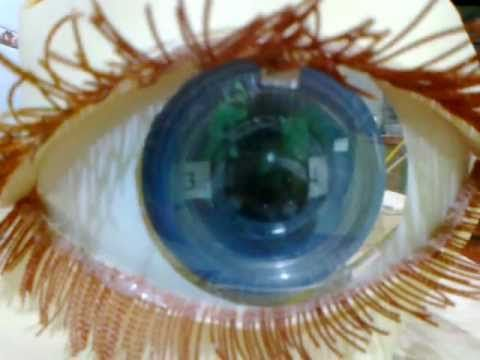 MAQUETA DEL OJO HUMANO. MODEL OF THE EYE - YouTube