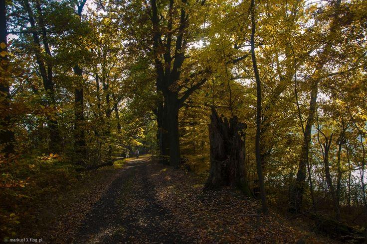 Jesienny Łężczok