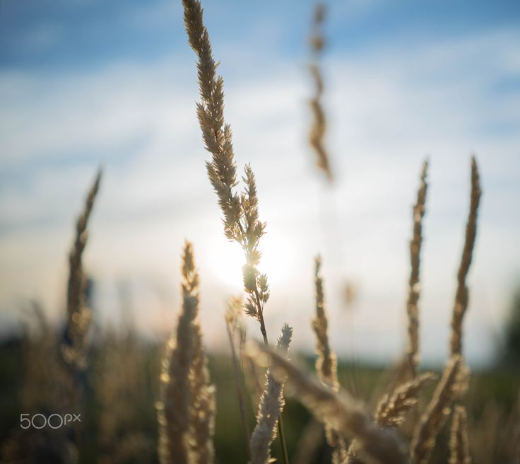 Golden Hour - .....