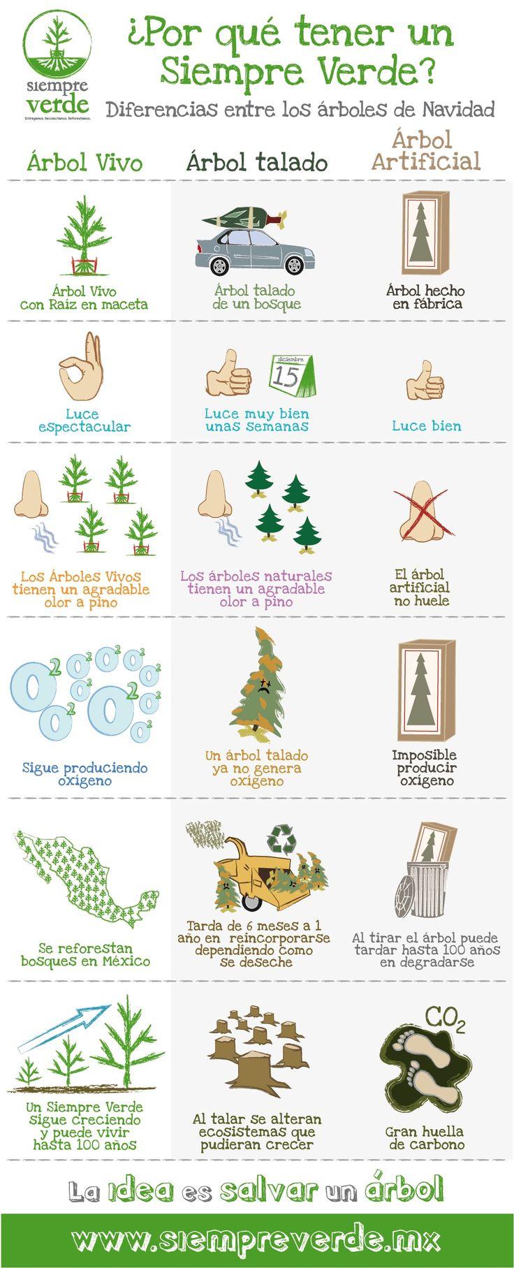 Diferencias entre un árbol de Navidad Vivo, uno talado y uno artificial
