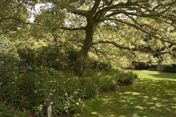 Un roble para cada jardín