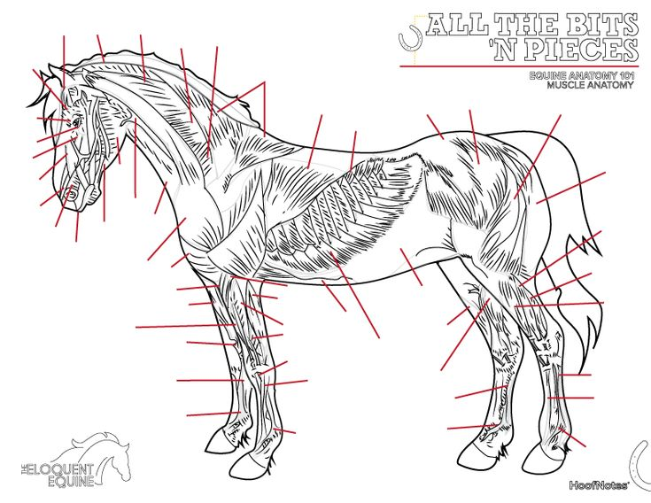 back anatomy coloring pages - photo#21