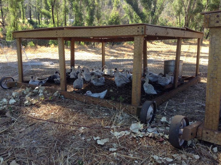 17 best images about ducks on pinterest cattle easy diy for How to build a duck shelter