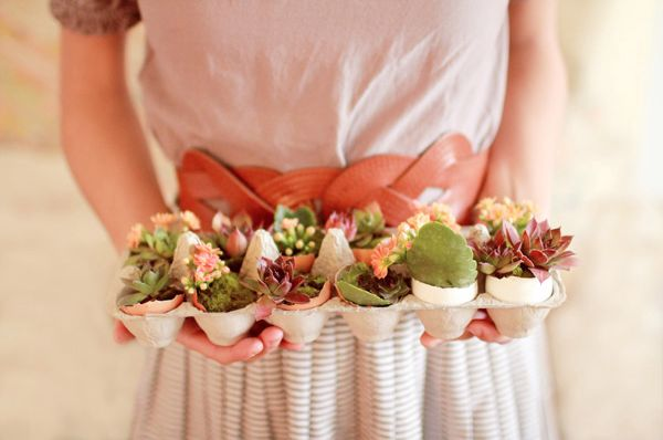 Easy Easter DIY Decoration; succulents in egg shells/carton. Pretty as a centerpiece. Or you could scale it down to one or three in a grouping