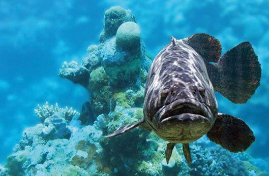 Pollution des océans : les poissons sont attirés par les prédateurs