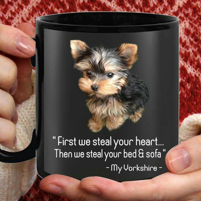 totally true... even if they are crate trained