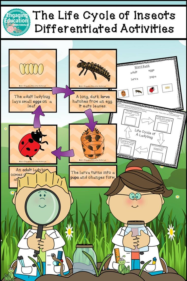 These differentiated science center activities include 6 sets of matching/sequencing cards and cut & paste activities for the following insect life cycles: black vine weevil, butterfly, darkling beetle, fly, ladybug, and mosquito.
