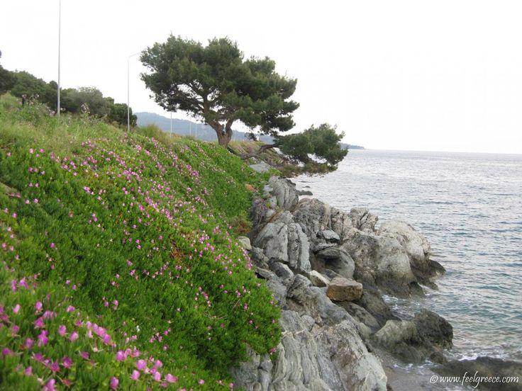 Νέος Μαρμαράς - ξενοδοχεία, παραλίες βραβευμένη με Γαλάζια Σημαία και εκδρομές με βάρκα - Σιθωνία