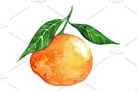 Watercolor ripe mandarin clementine. Ingredient #watercolor