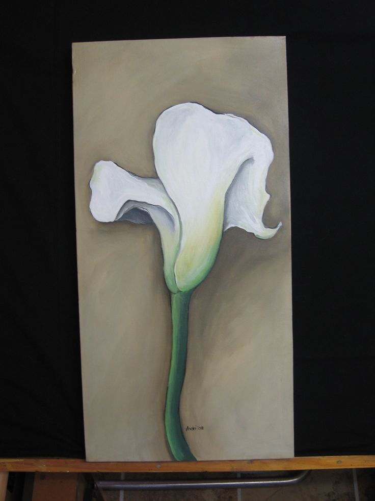 Arum Lily 2